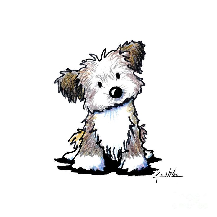 Quizzical Havanese Drawing.