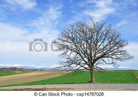Stock Photo of Green field and Seven Star Tree Hill, Biei.