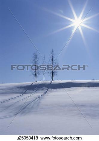 Pictures of Biei In Winter u25053418.