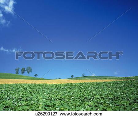 Picture of Farmland in Biei.