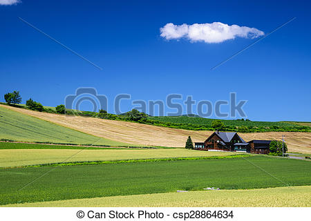 Stock Photos of Barley Field with cottage in Biei province.