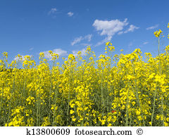 Biennial plant Images and Stock Photos. 1,100 biennial plant.