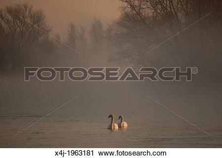 Stock Photography of wildlife in natural park 'de biesbosch' in.