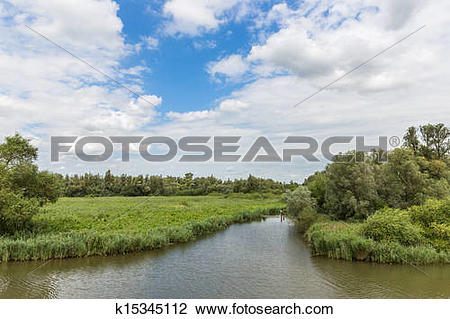 """Stock Photo of Swamp of the National Park """"De Biesbosch"""" in the."""