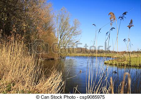 Stock Images of Biesbosch national park in Dordrecht Holland.