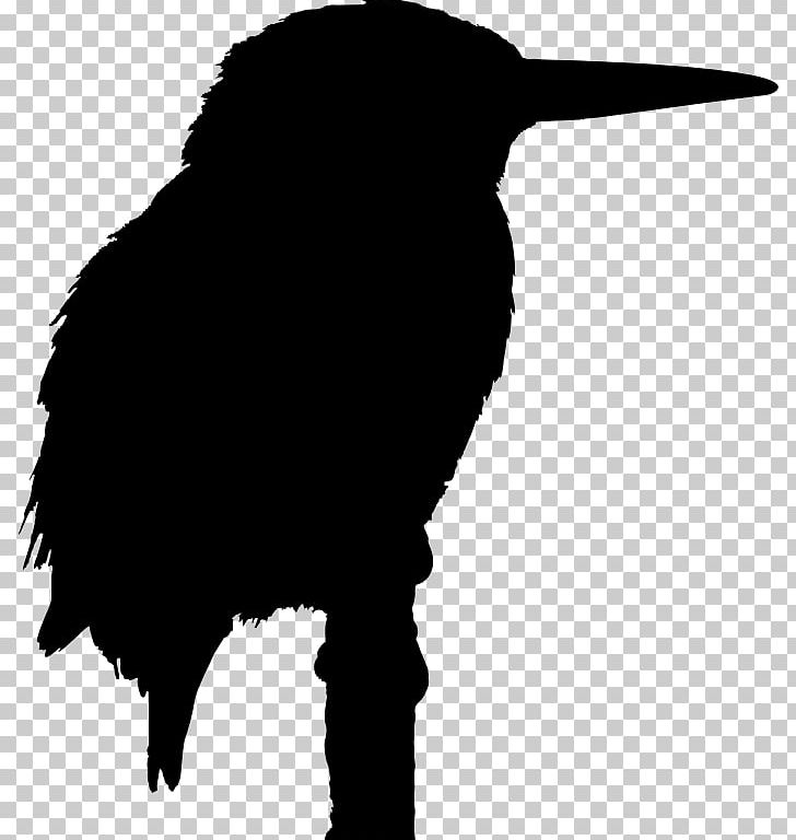 Big Bird Belted Kingfisher PNG, Clipart, Animals, Azure Kingfisher.