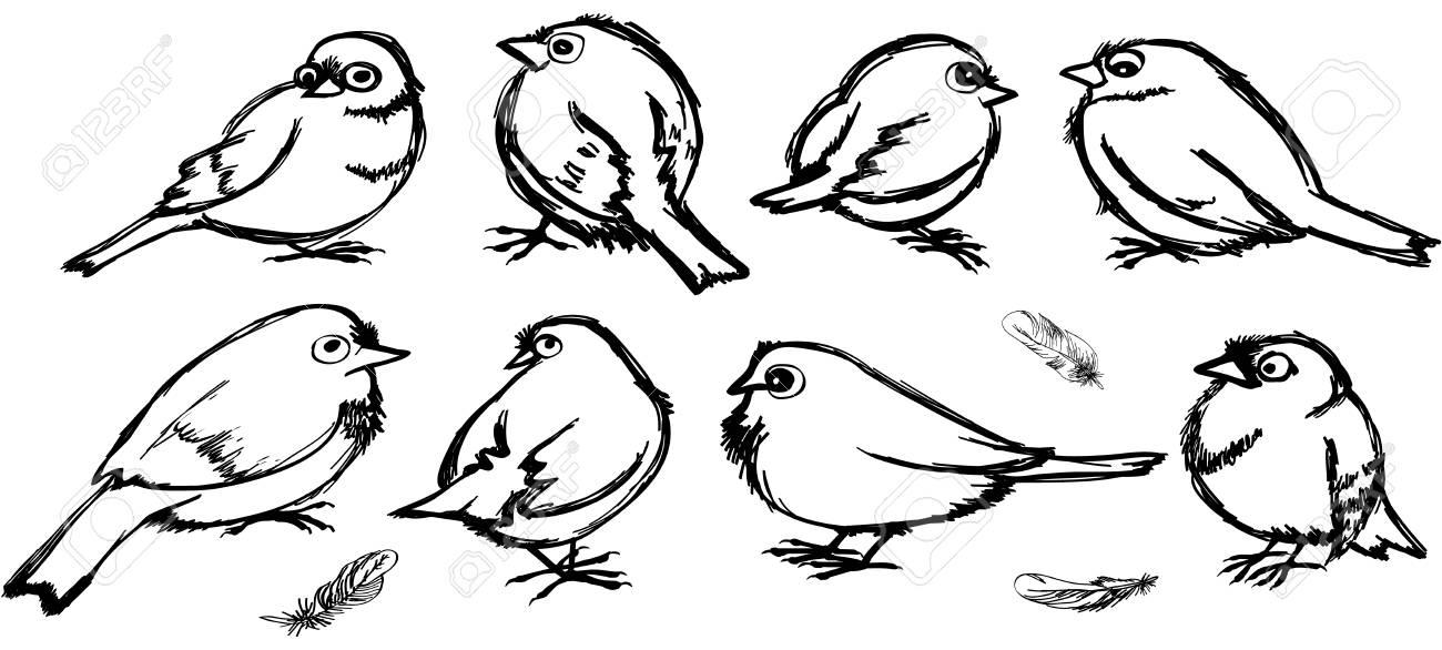 Set of contours of birds. Cartoon sparrows with big eyes in black...