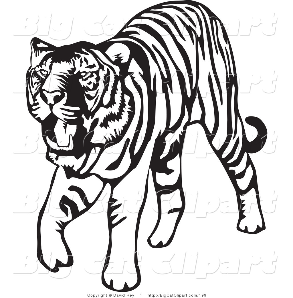 Royalty Free Black and White Stock Big Cat Designs.