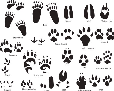 Animal Paw Clipart.