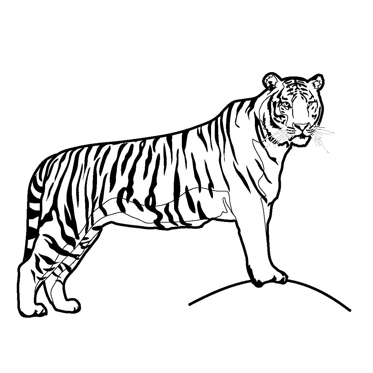 Clip Art: Big Cats: Tiger Color 2.