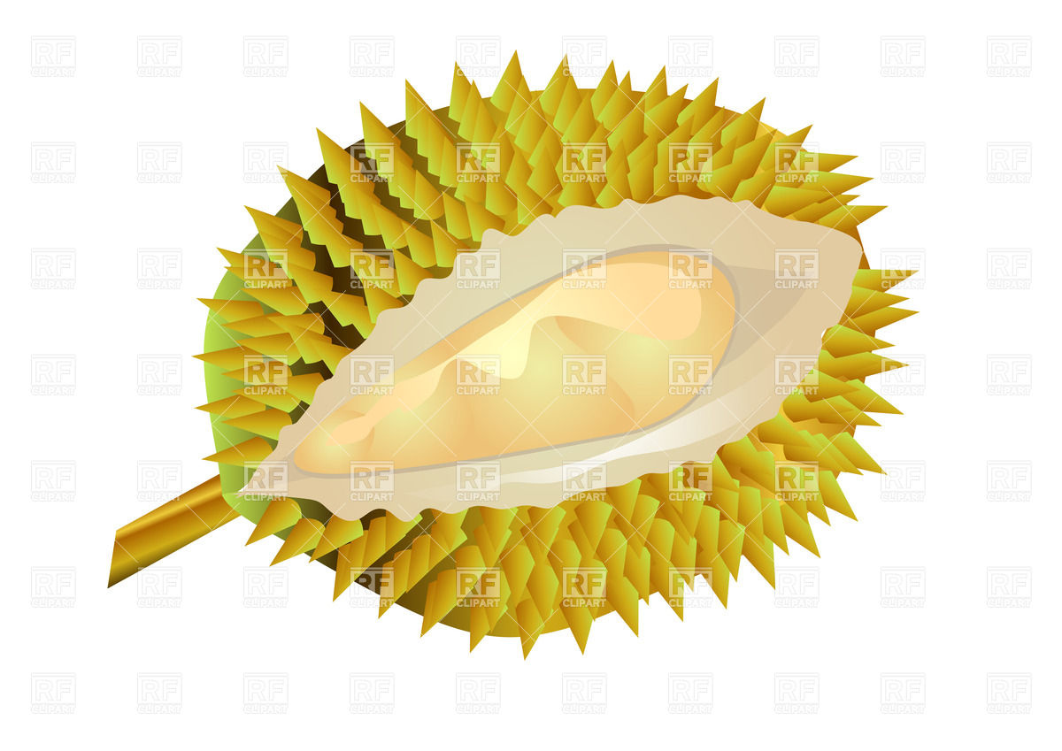 Durian fruit Vector Image #35030.