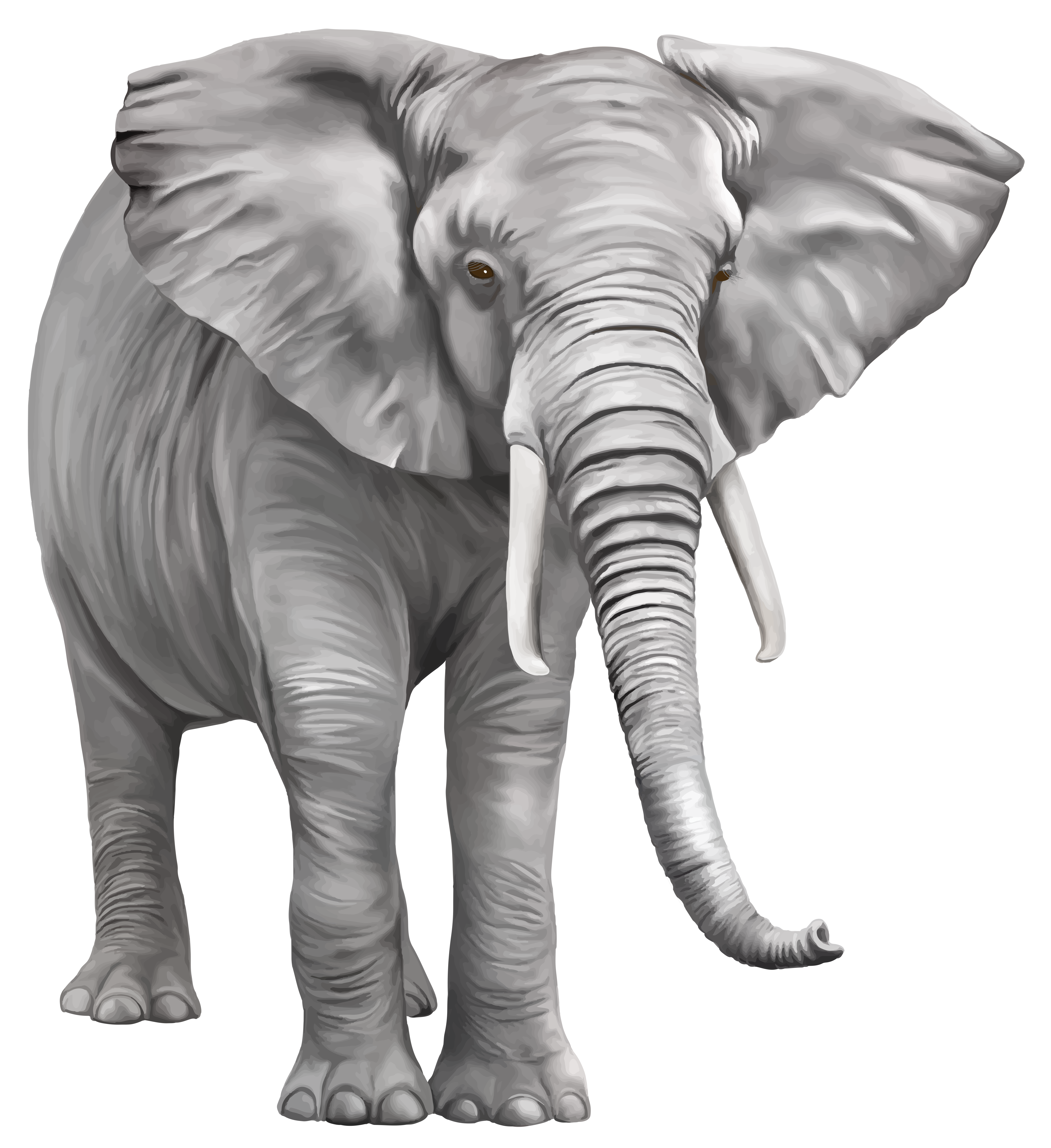 Elephant Large PNG Clipart.