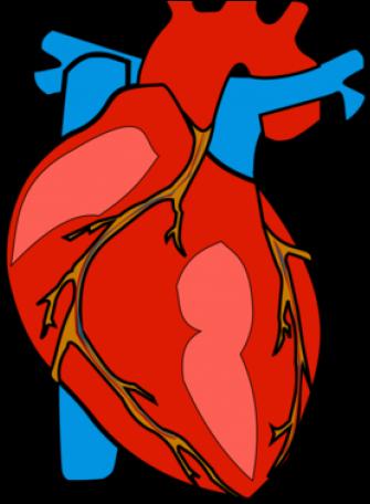 Body Clipart Heart.
