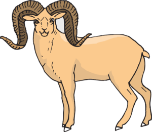 Big horn sheep clipart.