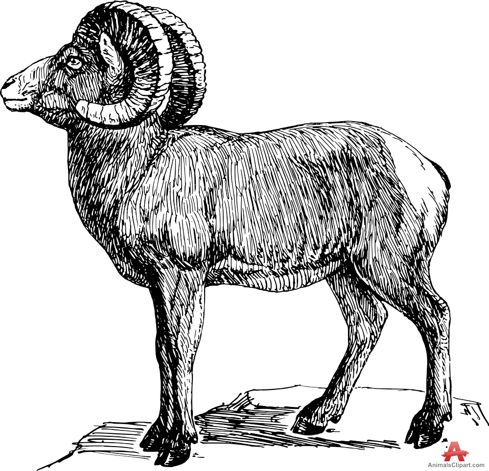 Long horn sheep coloring pages ~ Long horned sheep clipart 20 free Cliparts | Download ...