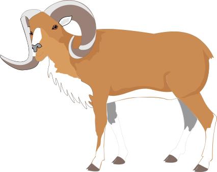 bighorn sheep color.