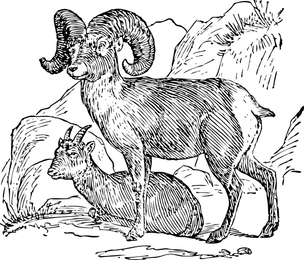 Bighorn Sheep clip art Free vector in Open office drawing svg.