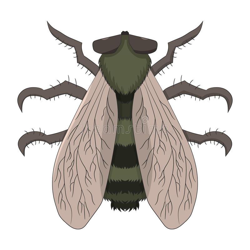 Big Horsefly Stock Illustrations.