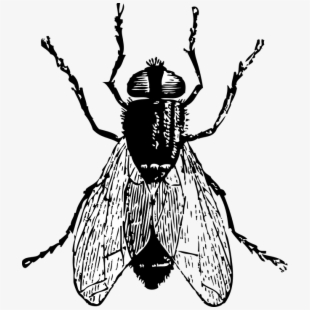 Library of big horse fly cartoon picture png files.