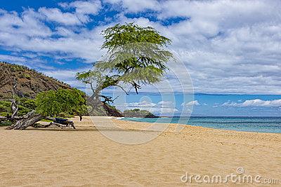 Big makena beach clipart #13