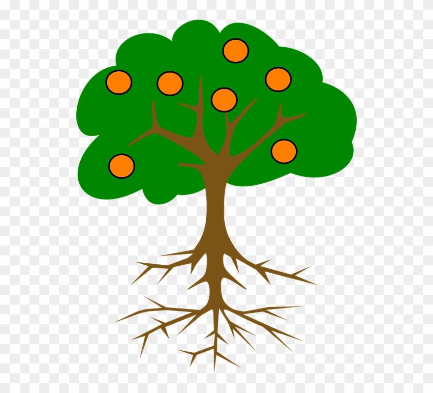 Collection Of Cartoon Orange Tree.