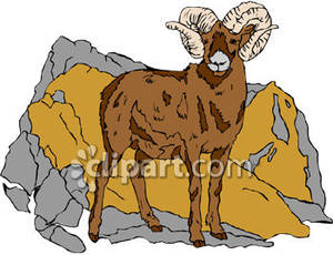Big_Mountain_Goat_Royalty_Free_Clipart_Picture_090301.