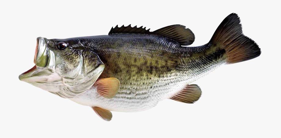 Big Fish Clipart No Background.