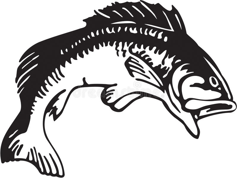 Large Mouth Bass Stock Illustrations.