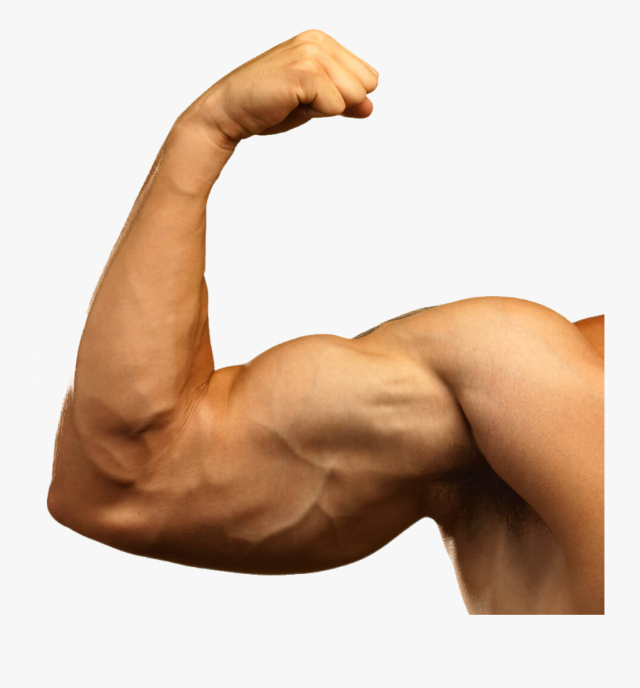 Muscle Png Image.