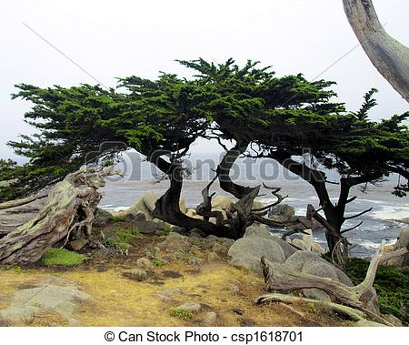 Stock Photography of The Big Sur 2.