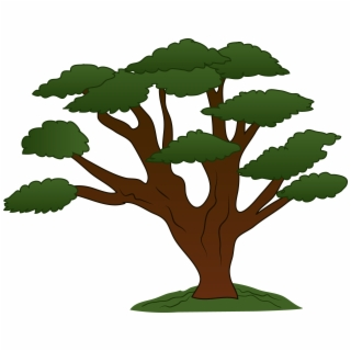 Big Tree PNG Images.