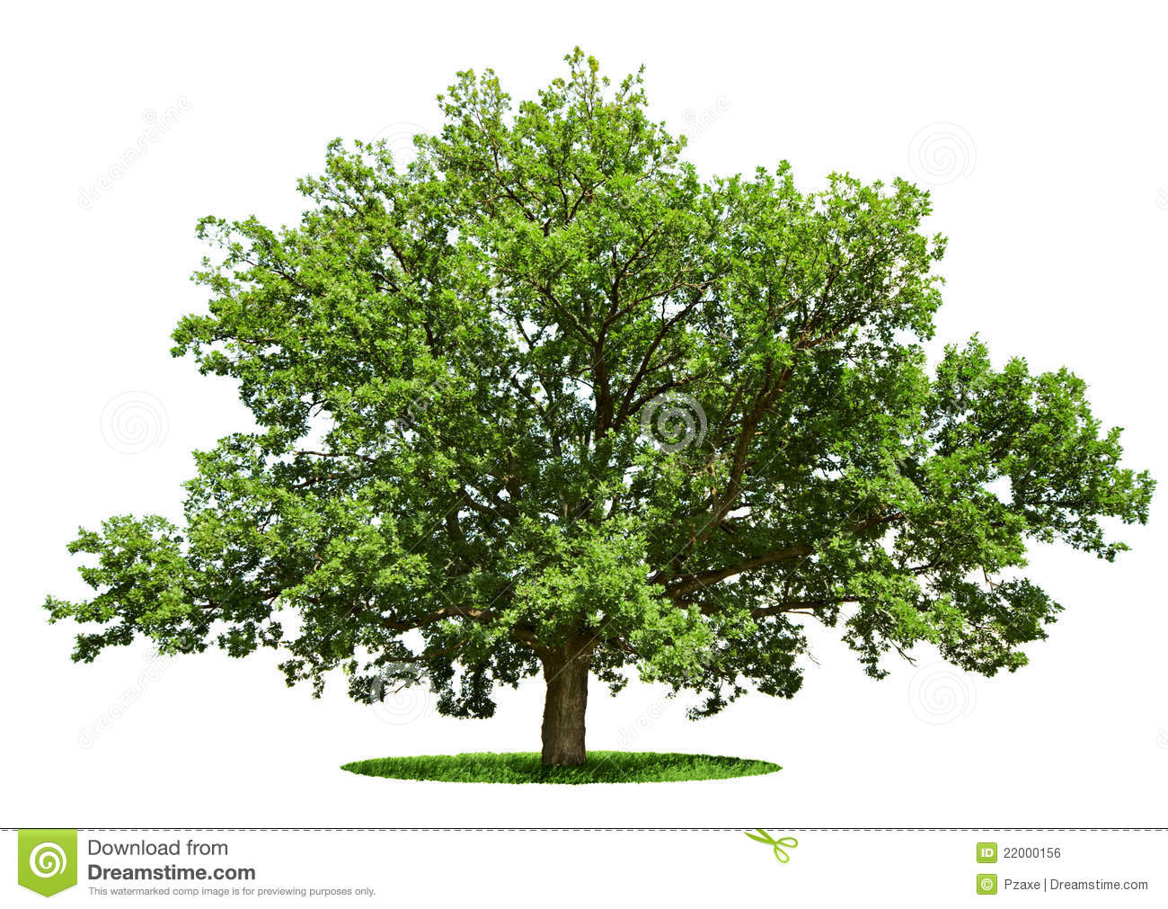 Huge tree clipart.