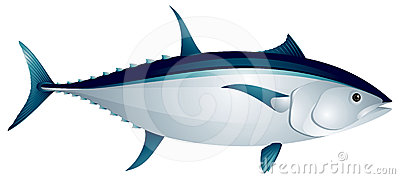 Yellowfin Tuna Royalty Free Stock Photos.