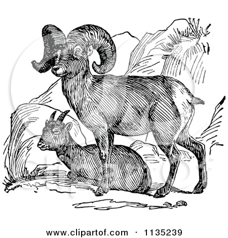 Clipart Of A Retro Black And White Bighorn Sheep Pair.