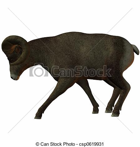 Clipart of American Bighorn Sheep.