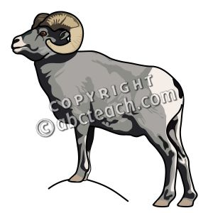 Big horn sheep clipart.