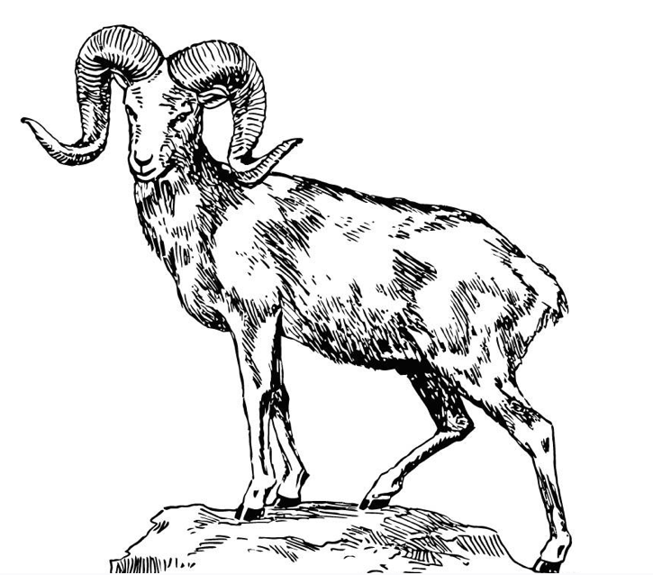 rocky mountain coloring pages - rocky mountain bighorn sheep clipart clipground
