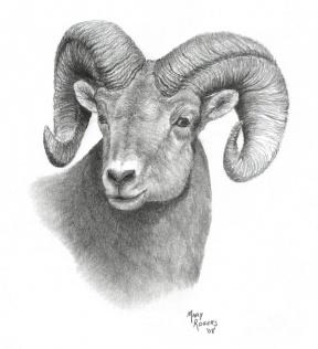 29+ Bighorn Sheep Clipart.