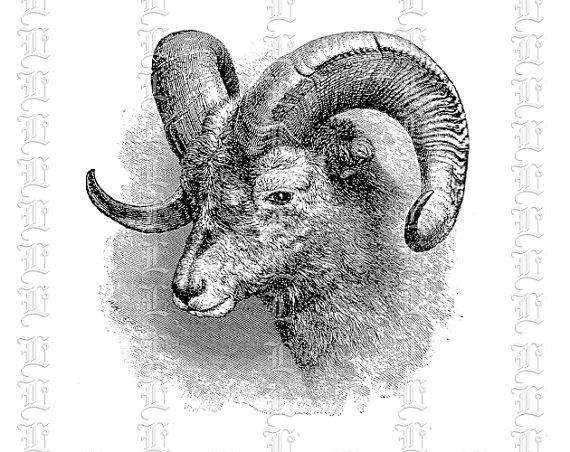 Big Horn Ram Male Sheep Head Aries Vintage Clip Art Illustration.