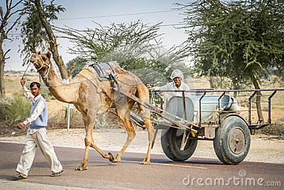 Indian camel clipart.