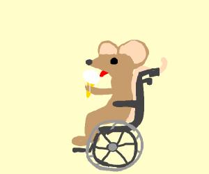 Mouse Biking.