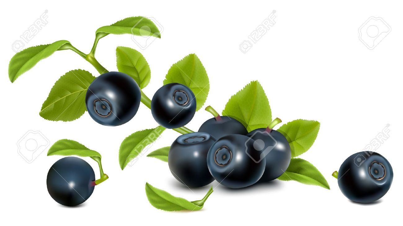 Bilberry With Leaves. Royalty Free Cliparts, Vectors, And Stock.