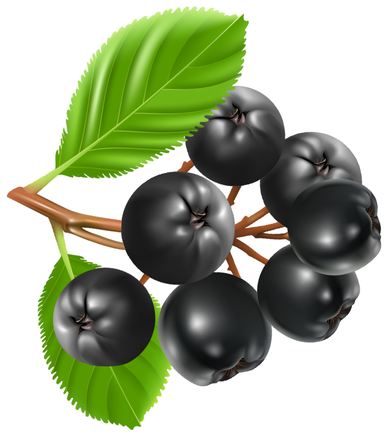 Blueberries PNG Clipart Image.