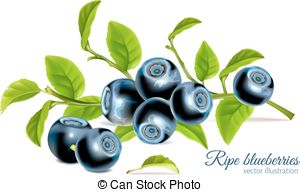 Bilberries Stock Illustrations. 744 Bilberries clip art images and.