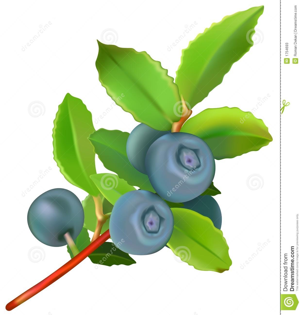 Blueberries Stock Photos.