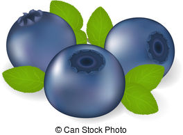 Bilberry Stock Illustrations. 845 Bilberry clip art images and.