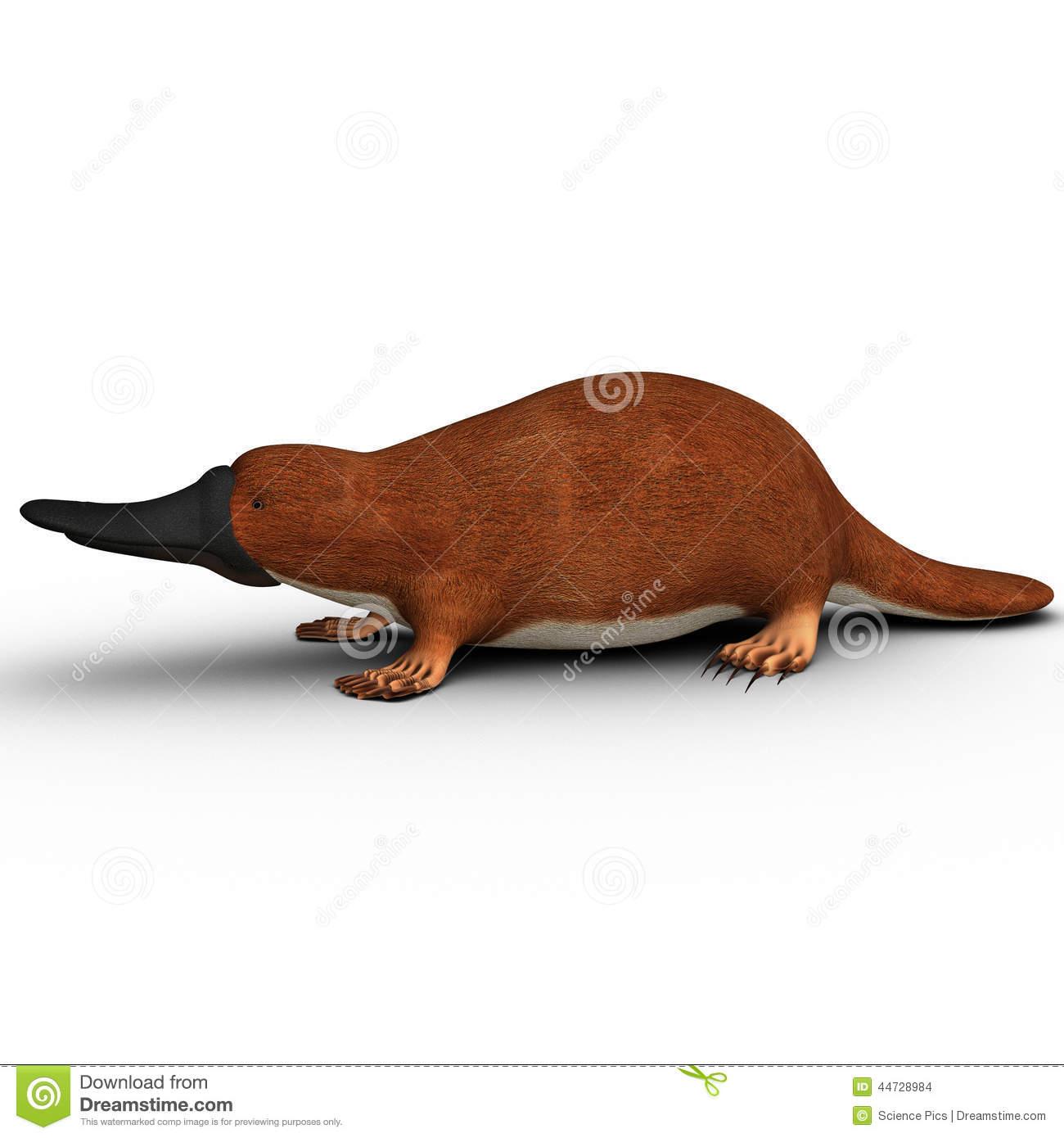 Duck billed platypus clipart.