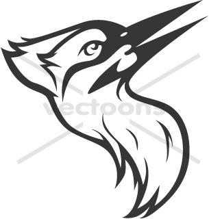 Ivory Billed Woodpecker Head in Black.