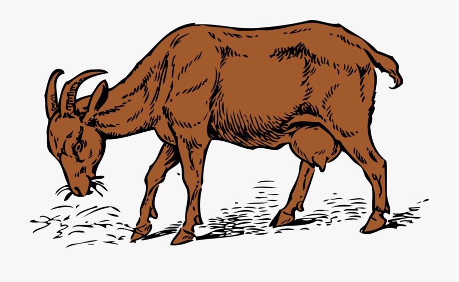 Horse Clipart Goat.