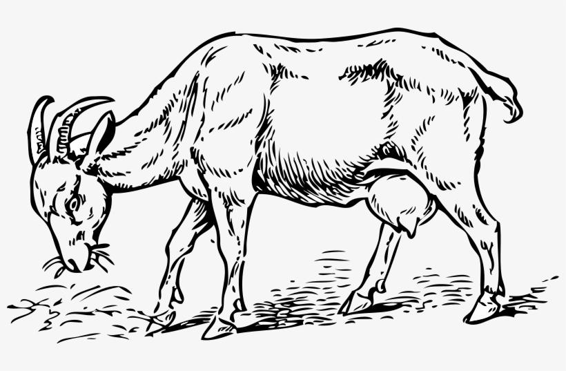 Goat 001.